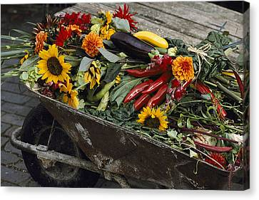 Sunflowers, Dahlias, Eggplants, Pepper Canvas Print by Jonathan Blair