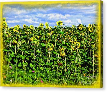 Sunflowers In France Canvas Print by Joan  Minchak