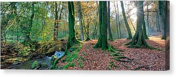 Sunlit Woodland, Birks O'aberfeldy, Perthshire Canvas Print by Kathy Collins
