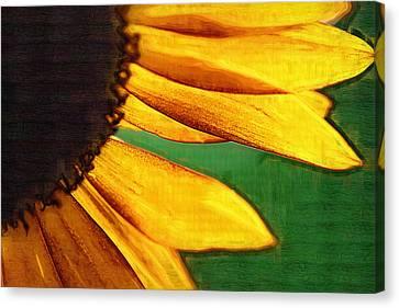 Sunny Sunflower Canvas Print by Kathy Clark