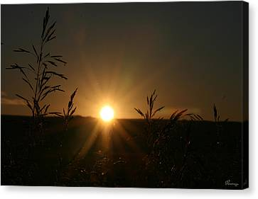 Sunrise And Spiderwebs Canvas Print by Andrea Lawrence
