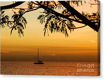 Sunset Sail Canvas Print by Rene Triay Photography