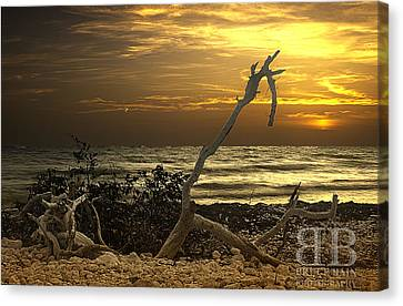 Sunset West II Canvas Print by Bruce Bain
