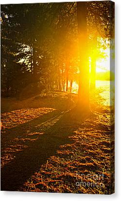 Sunshine In Evening Forest Near Lake Canvas Print by Elena Elisseeva