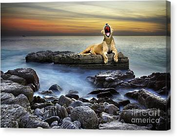 Surreal Lioness Canvas Print by Carlos Caetano