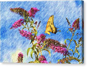 Swallowtail And Butterfly Bush Canvas Print by Heidi Smith