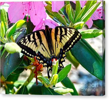 Swallowtail Spring Canvas Print by Diane E Berry