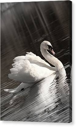 Swan 2 Canvas Print by Nan Schefcick