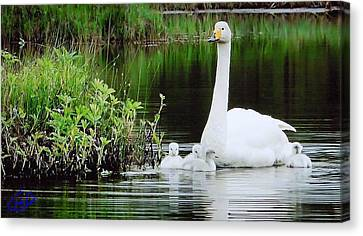 Swan Family Late Summer Canvas Print by Colette V Hera  Guggenheim