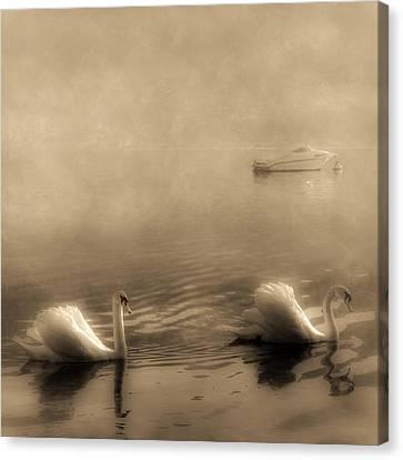 Swans Canvas Print by Joana Kruse