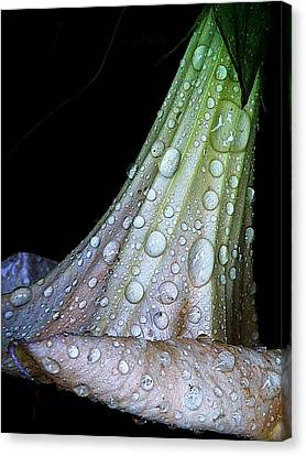 Sweet And Rainy Canvas Print by Chris Berry