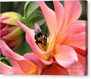 Sweet Nectar Canvas Print by Rory Sagner