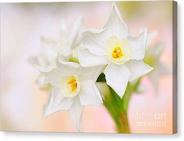 Sweet Spring Canvas Print by Jacky Parker