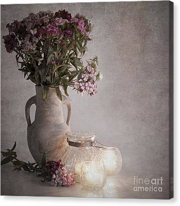 Sweet Williams Vintage Canvas Print by Jane Rix