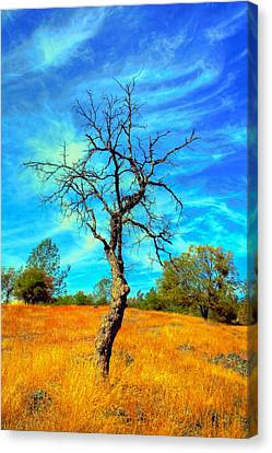 Tall Bare Tree With White Clouds And Blue Sky. Canvas Print by Gregory Dean