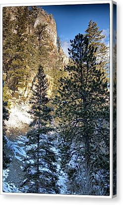 Tall Trees Canvas Print by Lisa  Spencer