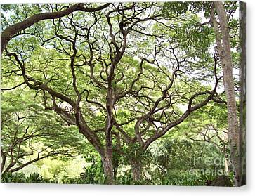 Tangled Hawaiian Tree Canvas Print by Deborah Cummins
