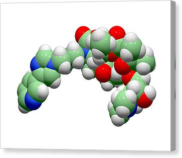 Telithromycin Antibiotic Molecule Canvas Print by Dr Tim Evans