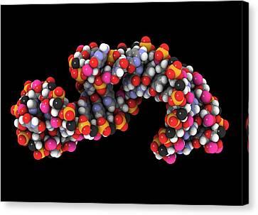 Telomerase Molecule, Artwork Canvas Print by Laguna Design