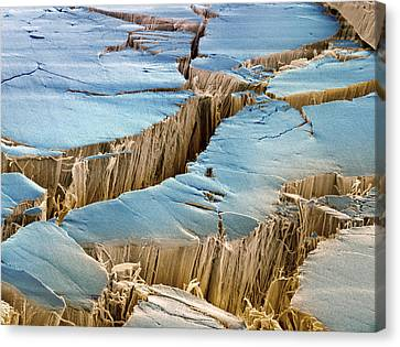Tendon, Sem Canvas Print by Steve Gschmeissner