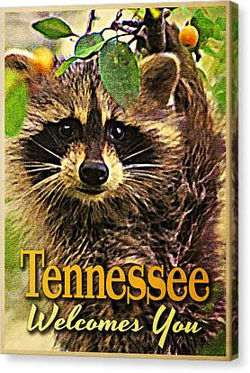 Tennessee Racoon Canvas Print by Flo Karp