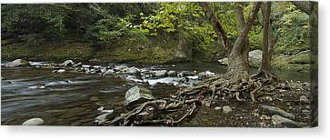 Tennessee Stream Panorama 6045 6 Canvas Print by Michael Peychich
