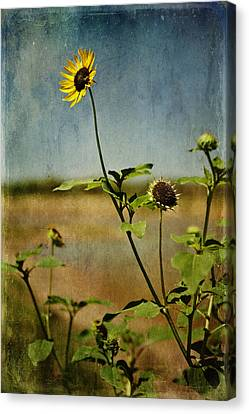 Textured Sunflower Canvas Print by Melany Sarafis