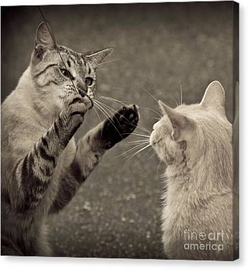 That Mouse Was This Big Canvas Print by Kim Henderson