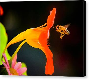 The Bee Canvas Print by Mickey Clausen