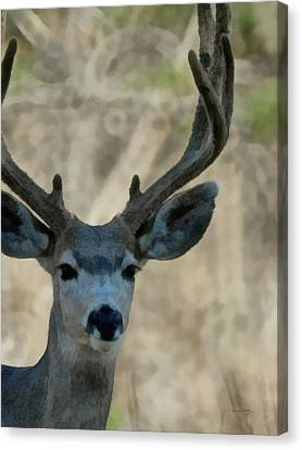 The Buck Painterly Canvas Print by Ernie Echols
