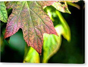 The Colors  Canvas Print by The Phoblographer