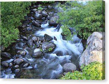 The Creek Canvas Print by Nance Eakins
