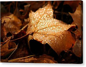 The Enlightened Maple Leaf Canvas Print by LeeAnn McLaneGoetz McLaneGoetzStudioLLCcom