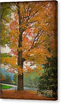 The Fay Tree Canvas Print by Deborah Benoit