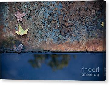 The Garden Pond Canvas Print by Steven Gray