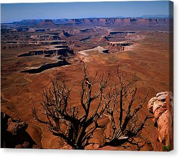 The Green River Over Look Canyonland National Park Canvas Print by Daniel Chui