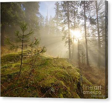The Guardians Canvas Print by Idaho Scenic Images Linda Lantzy