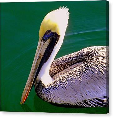 The Happy Pelican Canvas Print by Karen Wiles