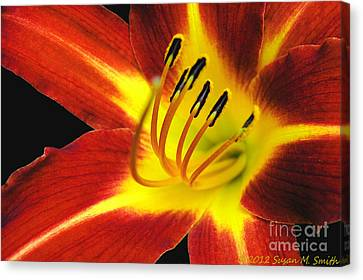 The Heat Is On Canvas Print by Susan Smith