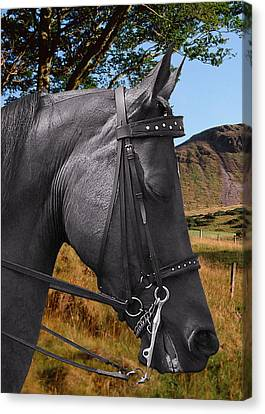 The Horse - God's Gift To Man Canvas Print by Christine Till
