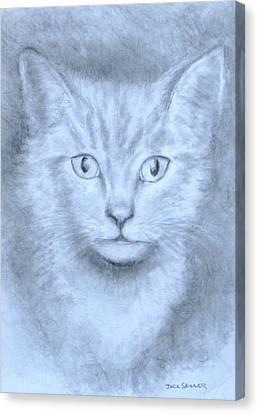 The Kitten Canvas Print by Jack Skinner