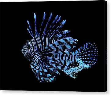 The Lionfish 3 Canvas Print by Robin Hewitt