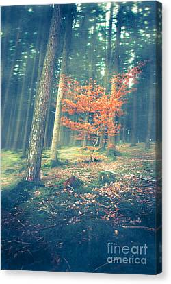 The Little Red Tree - Vintage Canvas Print by Hannes Cmarits