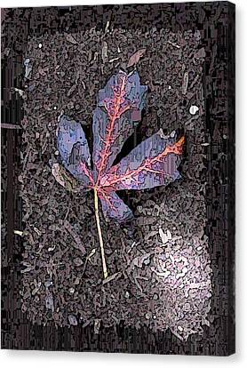 The Maple 5 Canvas Print by Tim Allen