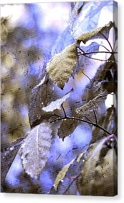 The Melody Of The Silver Rain Canvas Print by Jenny Rainbow