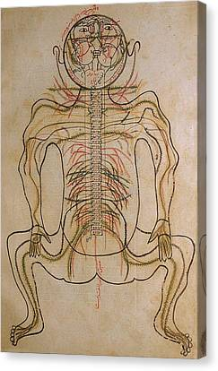 The Nervous System, From Mansurs Canvas Print by Everett