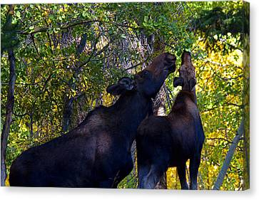 The Picnic In The Park Canvas Print by Jim Garrison