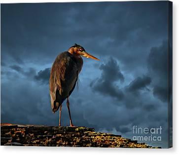 The Rooftop Watcher Canvas Print by Gail Bridger