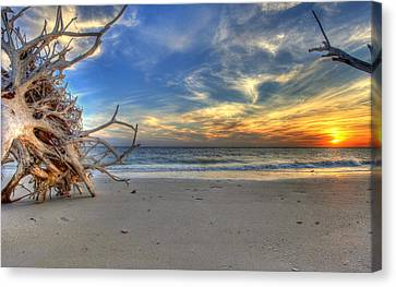 The Root Of Sunshine Canvas Print by Sean Allen