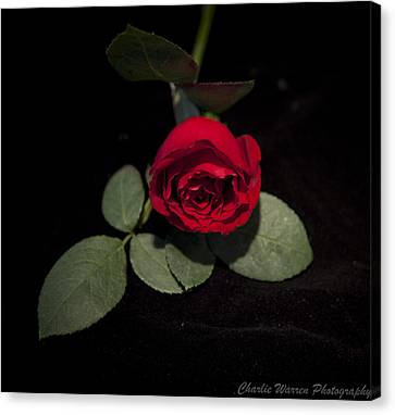 The Rose Canvas Print by Charles Warren